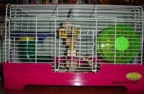 new cage