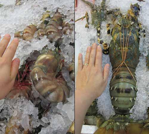 giant seafood