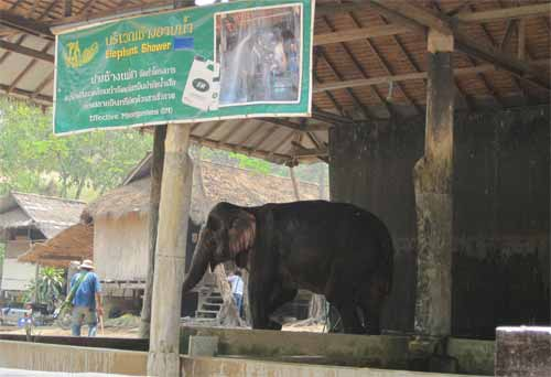 Maesa Elephant Camp: elephant shower
