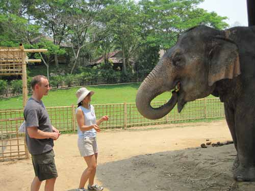 Maesa Elephant Camp: feeding elephants at the nursery