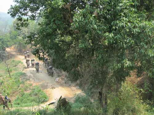 Maesa Elephant Camp: caravan