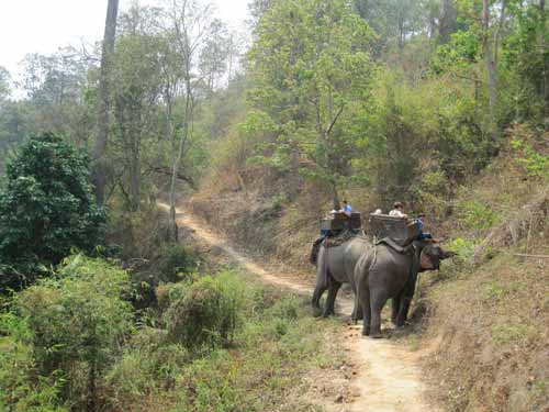 Maesa Elephant Camp: hungry elephants