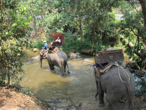 Maesa Elephant Camp: stream