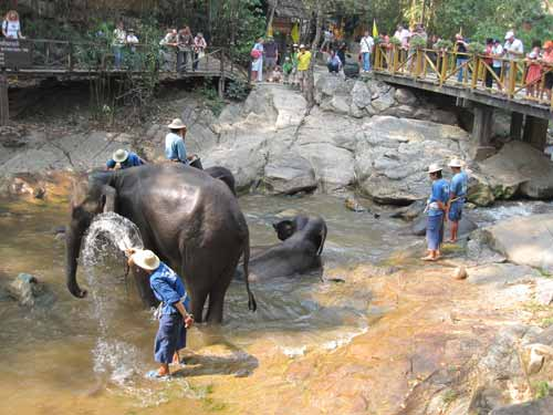 Maesa Elephant Camp: elephant bath