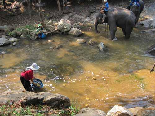Maesa Elephant Camp: elephant dung gathering