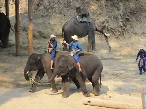 Maesa Elephant Camp: elephants gathering