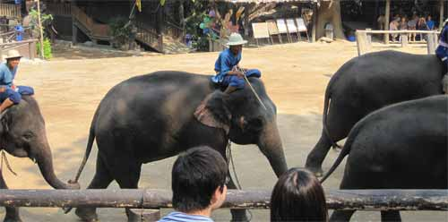 Maesa Elephant Camp: elephant march