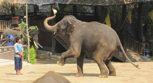 Maesa Elephant Camp: elephant steals mahout hat