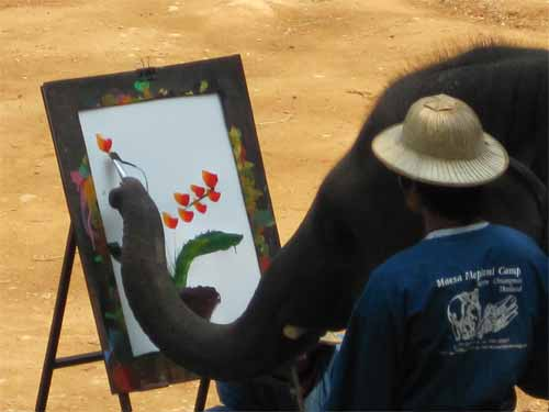 Maesa Elephant Camp: elephant painting