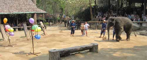 Maesa Elephant Camp: elephant v. humans