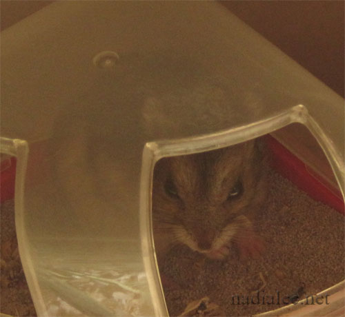 Peanut hiding